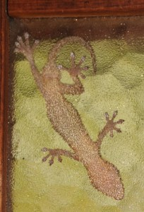 A gecko on a window pane, viewed from underneath