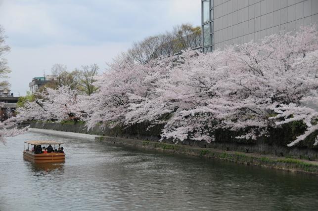 boat trip for hanami