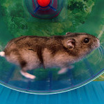 a hamster running in a wheel