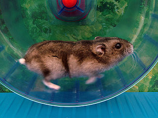 a hamster running in a wheel