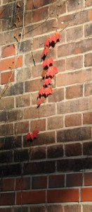 red ivy leaves on a brick wall