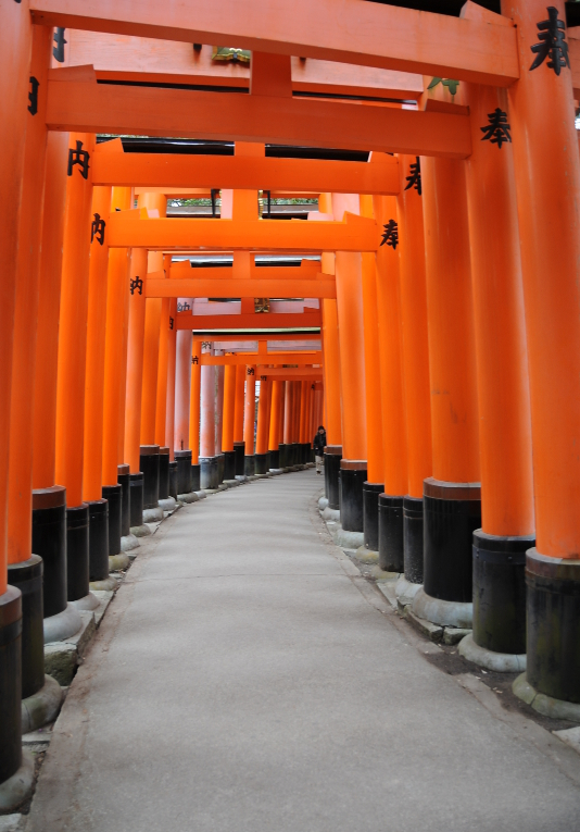 Torii lining the paths up Inari hill