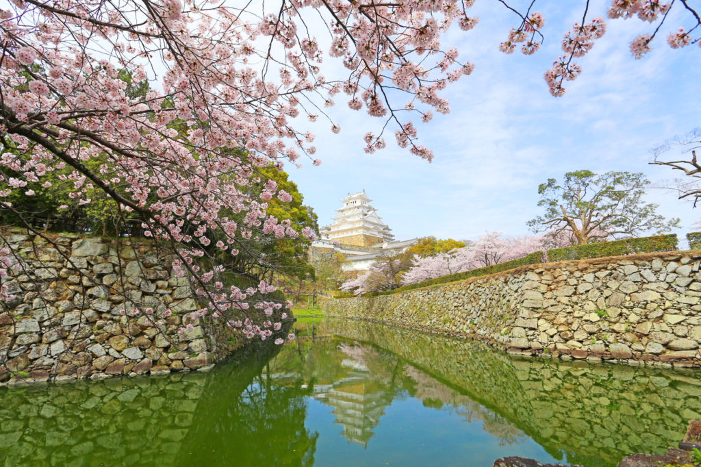 Himeiji Castle during Cherry Blossoms