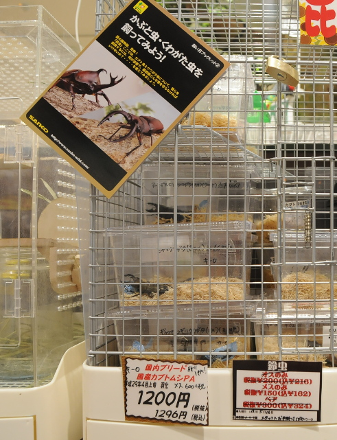 Japanese pet beetles