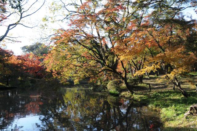 Botanical Gardens Kyoto - koyo 2019