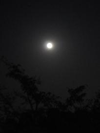 moon over osawa pond