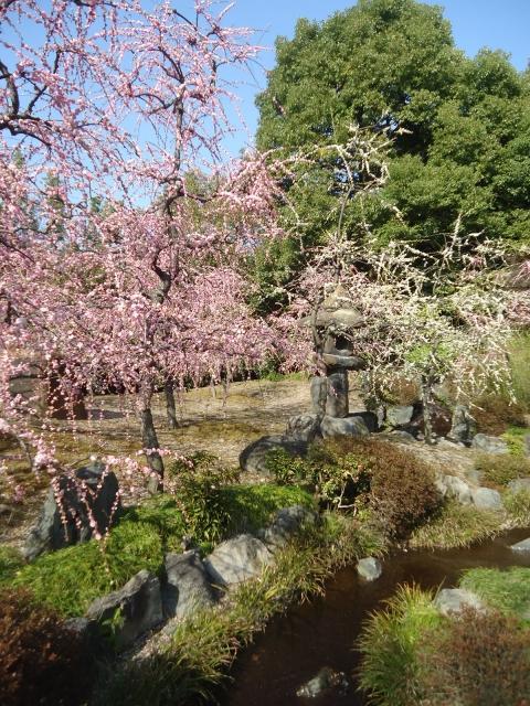 Jonan-gu spring mountain