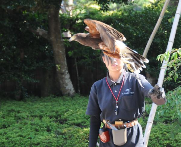 Hawk Show