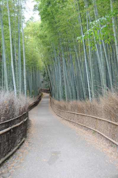 Kyoto's Bamboo Forest, completely empty.